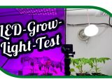 Led Grow Light Test Aussaat Jungpflanzenanzucht Zeitraffer with regard to proportions 1575 X 890